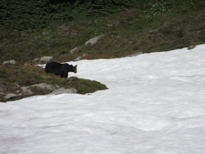 First bear sighting
