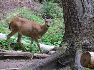 Campsite visitor