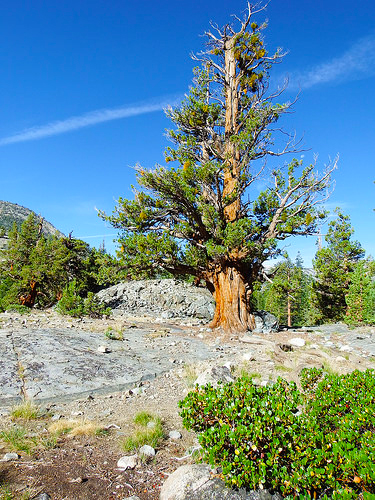 Trail near Piutte Pass Junction
