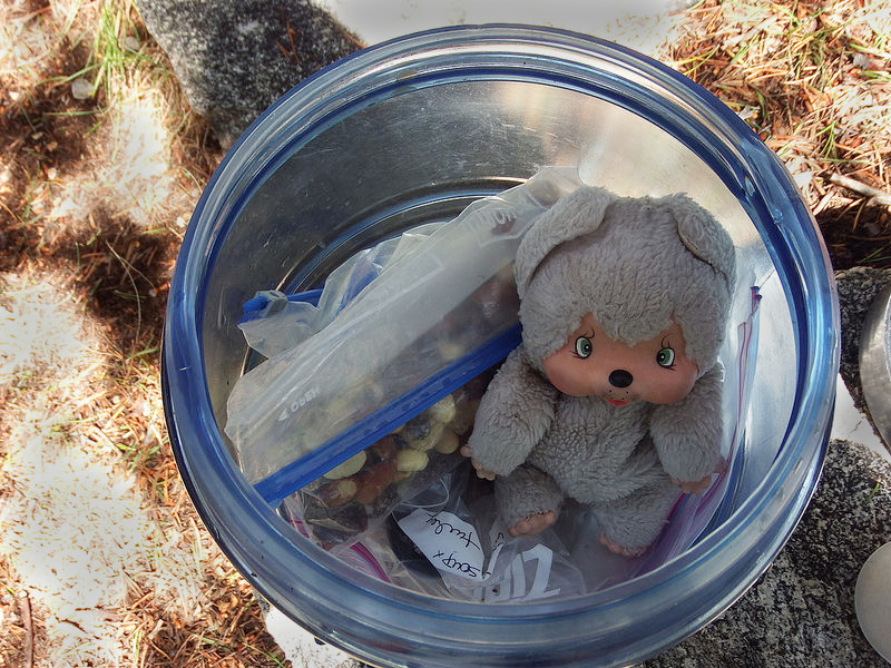 Look what happens if you leave your bear can open