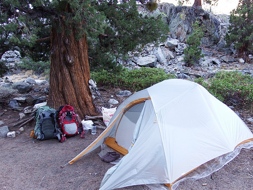 Flat campsite under a beautiful tree. The simple things that make backpackers happy.