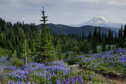 View literally 20 ft from our camp.  I wish you could smell the flowers.