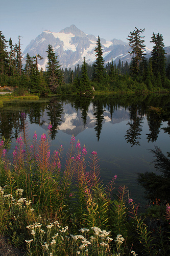 Mount Shuksan reflecting in Picture Lake. No hiking required for this shot.