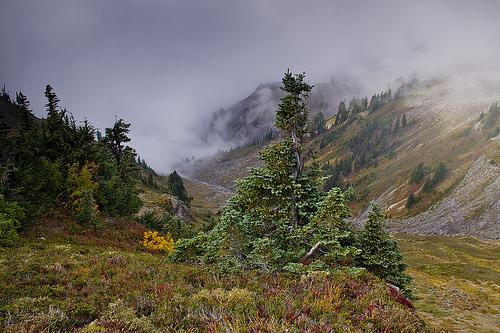 Fall colors at the plateau area of Ptarmigan Ridge