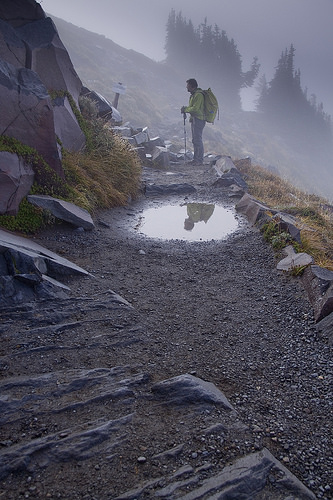Embracing foggy day in Mount Rainier NP